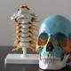 Chiropraktik und Osteopathie